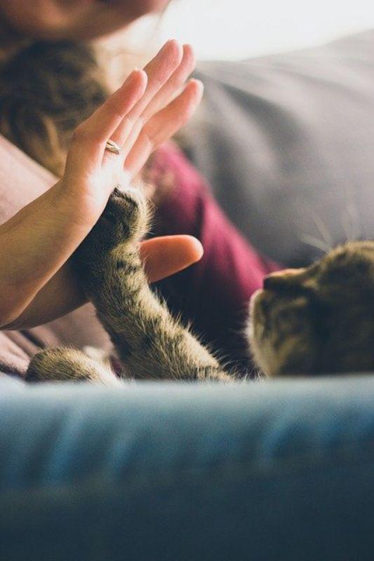 猫とタッチ